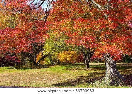Autumn colorful foliage.