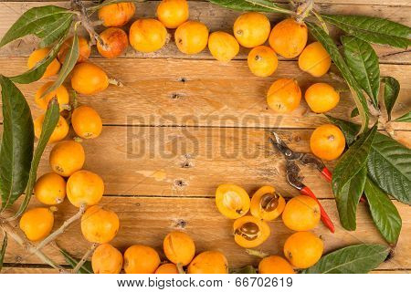Freshly Picked Loquats