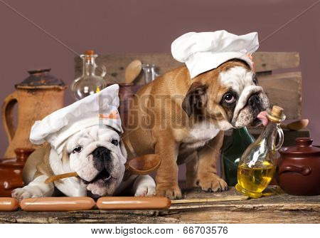 english Bulldog puppies in chef's hat
