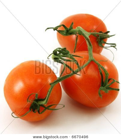 Fresh, ripe organic tomatoes on the vine