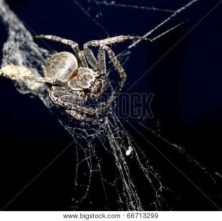 Spider On Web On Black Background