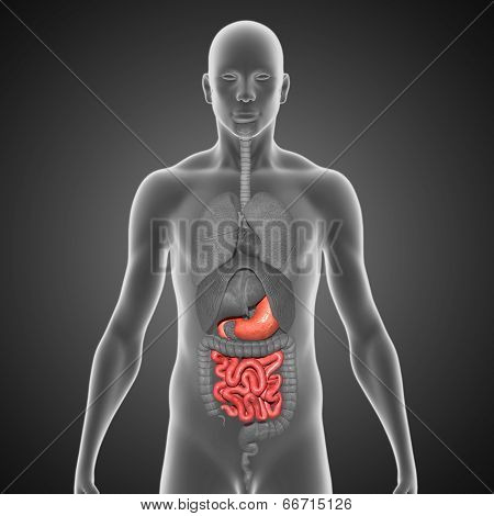 Stomach and small intestine black bg
