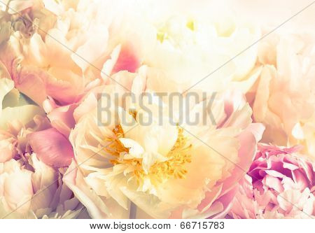 background  of beautiful pink peony in vintage style