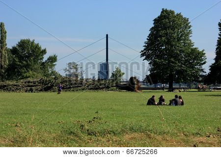 Group Of People  Sitting On The Grass In The Park