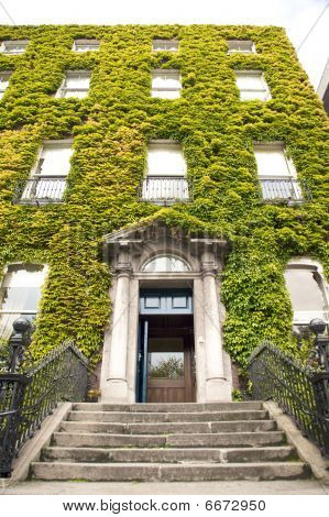 Ivy Building Door