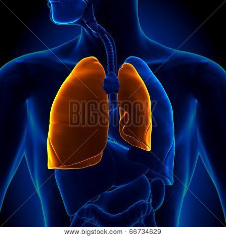 Pneumothorax - Collapsed Lung
