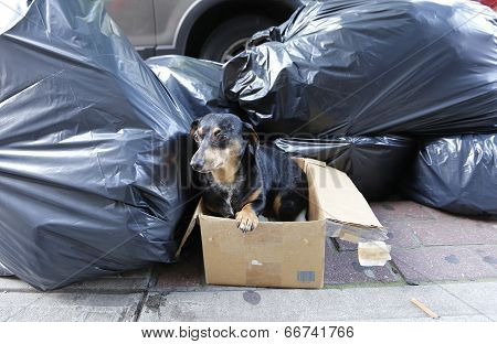 Small dachshund in box by trash