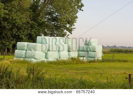 Piled Bales Harvested Dry Grass Wrapped In Plastic Film