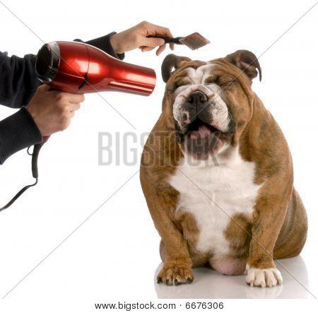 Perro acicalado