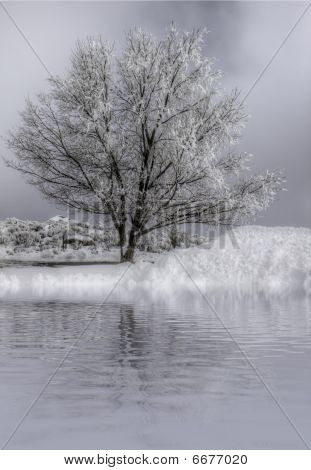 Snow Covered Tree Near Water