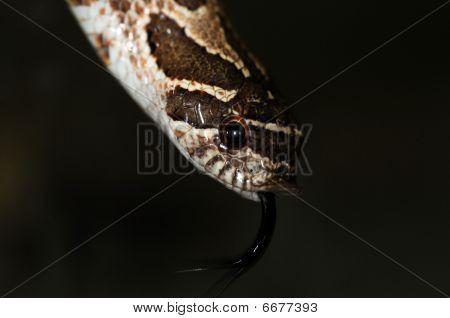 Snake-24