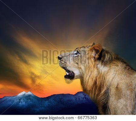 Side View Close Up Head Shot Of Young Lion Roar Against Beautiful Dusky Sky And Rock Mountain Use Fo