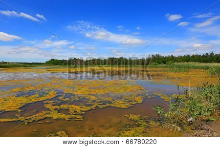 summer scene on lake with weeds  in forest