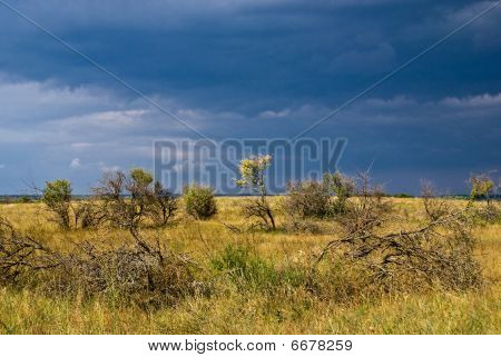 Forest-steppe Before The Storm