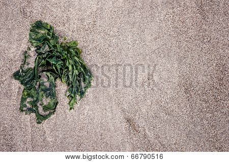Piece Of Green Seaweed