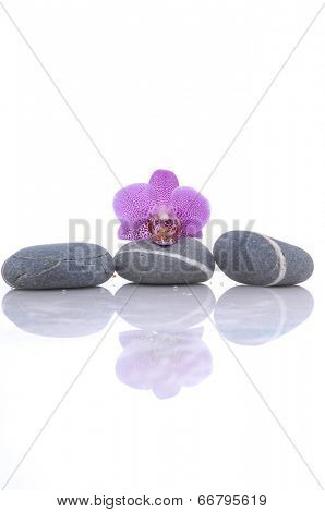 beautiful orchid with three stone