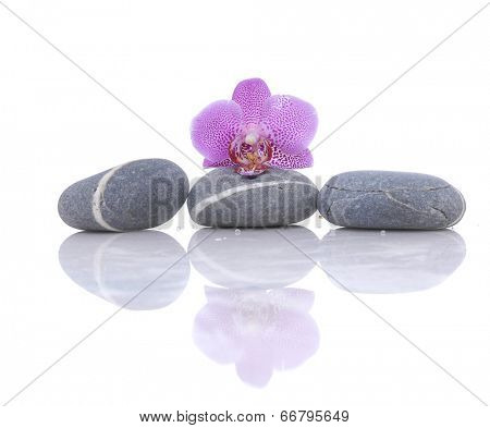 beautiful pink orchid with gray stones reflection