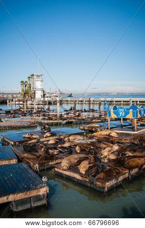 San Francisco, Usa - September 03: Pier 39 San Francisco Usa,2013