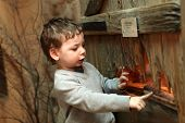 image of terrarium  - Child watching the insect in terrarium at zoo - JPG