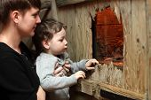 stock photo of terrarium  - Mother with her son watching the insect in terrarium at zoo - JPG