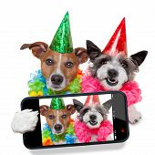 image of selfie  - couple of dogs taking a selfie together - JPG