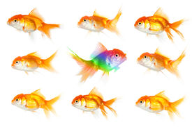 picture of swim meet  - Individuality thinking in business - JPG