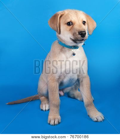 Little Yellow Puppy In Blue Collar Sitting On Blue