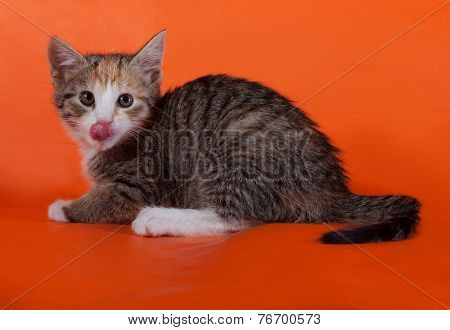 Tricolor Striped Kitten Sitting Nd Licked On Orange