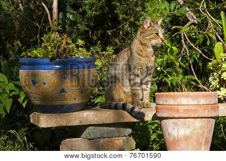 Cat In The Sunny Garden