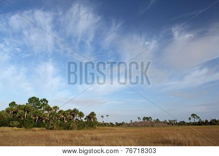 Subtropical Landscape Florida Everglades