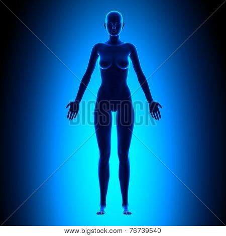 Full Female Body - Front View - Blue Concept