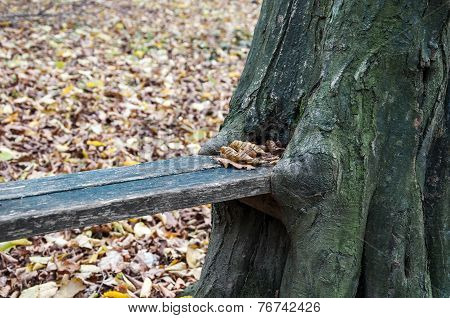 Makeshift bench in the woods