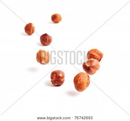 Falling Nuts Filbert