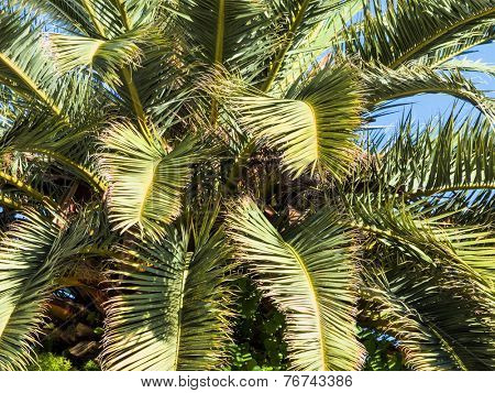 palm tree against blue sky, symbolic photo for holidays, long distance travel, exotic