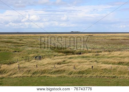 Marshland On Hallig Groede