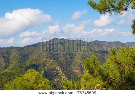 Troodos mountains landscape with the pine branches in the foreground, Cyprus.