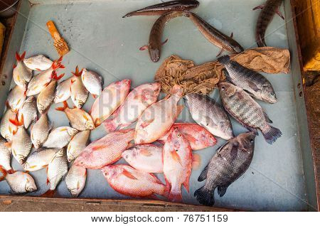 Fish At Market