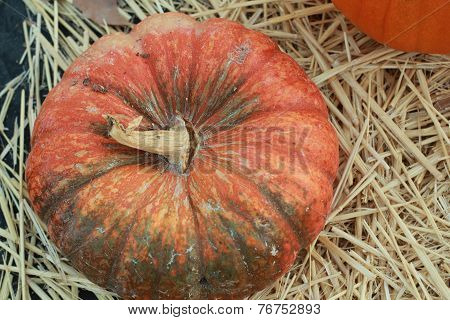 orange pumpkin with touch of green