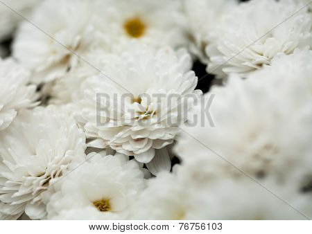 Close up of flower, shallow DOF artistic toned photo or nature background with space for text