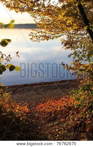 View Through Autumnal Leaves - Starnberg Lake