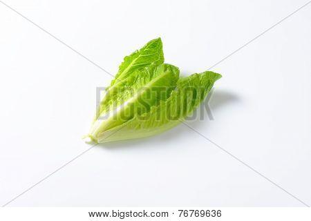heart of romaine lettuce on white background