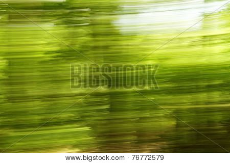 Blurred Trees Background