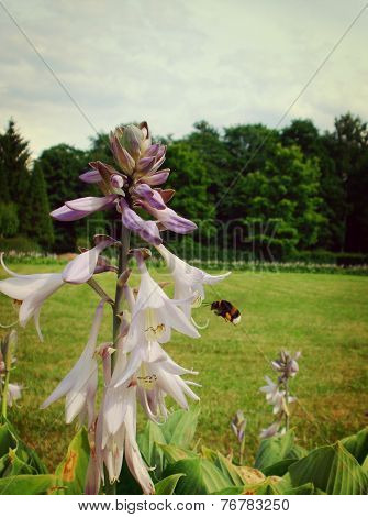 bumblebee flying near a flower, summertime