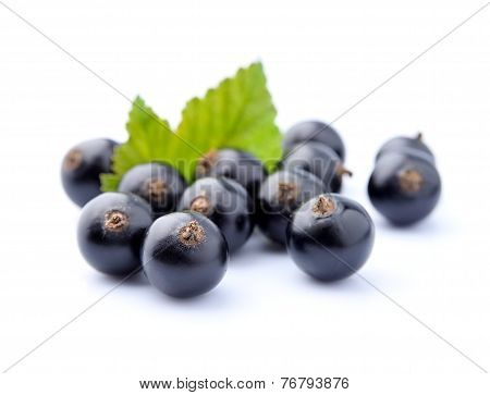 Sweet Black Currant With Leaves
