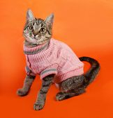 image of orange kitten  - Striped kitten in pink sweater sitting on orange background - JPG