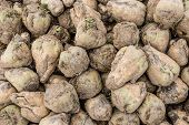 picture of sugar industry  - Closeup of a heap of recently harvested sugar beets on a sunny day in the fall season - JPG
