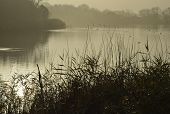 picture of water bird  - Morning Mist on Lake with Water Birds Cotswold Water Park - JPG