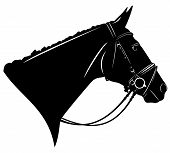 image of harness  - black horse profile head with harness  - JPG