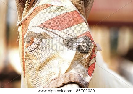 Horse In Funny Mask
