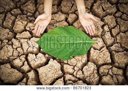 environmental destruction